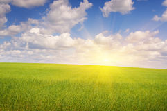 Green field and sun sky Royalty Free Stock Photos