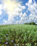 Green field and sun sky Royalty Free Stock Images