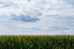 Green field on a sunny cloudy day royalty free stock photography