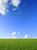 Green field on Sunny Day Royalty Free Stock Image