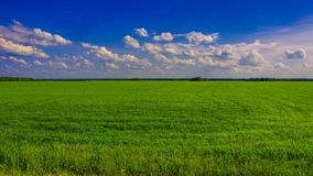 Green field on a Sunny day. A bright green field in a Sunny day Stock Images