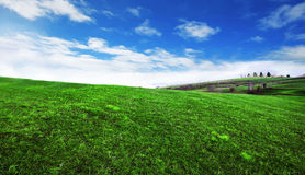 Green field with sunrays Royalty Free Stock Image