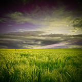 Green field and sunset Royalty Free Stock Photos