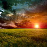 Green field at sunset Royalty Free Stock Images