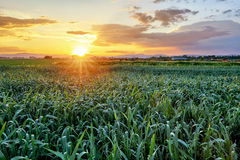 Green field at sunset. Stock Photography