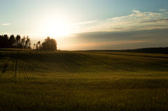 Green field and sunset. Classic composition Royalty Free Stock Images