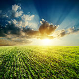 Green field and sunset Royalty Free Stock Photo