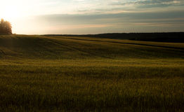 Green field and sunset. Field main composition. Natural colors a Stock Photography