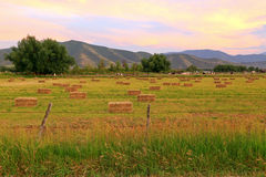 Green field sunset with hay bales. Sunset sky and farm fields, Utah, USA Stock Photo