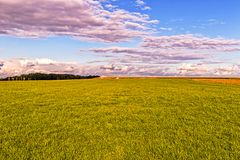 Green field at sunset. Landscape with autumnal green field at sunset Stock Image