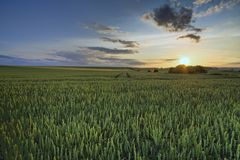 Green field in sunset Stock Images