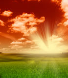 Green field and sunset sky. Green field with wheat and sunset cloudy sky Royalty Free Stock Photo