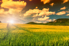 Green field in sunset sky Stock Photo