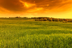 Green field at sunset sky Royalty Free Stock Photos