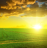 Green field with sunset sky. Royalty Free Stock Photo