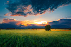 Green field at sunset. Royalty Free Stock Images