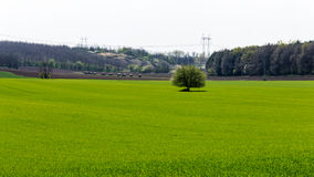 Green field surrounded by forest. Stock Images
