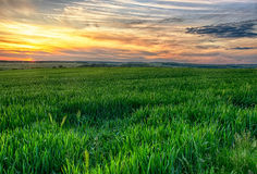 Green field on suset Stock Photo