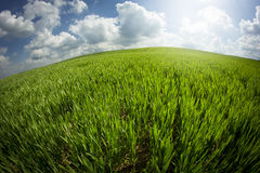 Green field taken with fisheye Royalty Free Stock Photography