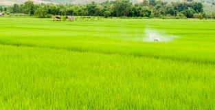 Green field at thailand Stock Photos