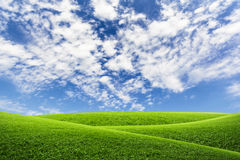 Green field top on blue sky and clouds. For background Stock Image