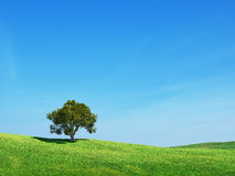 Green field and tree. Sky Stock Photography