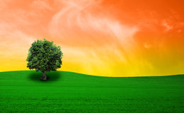 Green field and tree Royalty Free Stock Image
