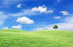 Green field, tree and blue sky Stock Images
