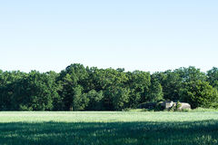 Green field and tree and blue sky and bunker royalty free stock photo