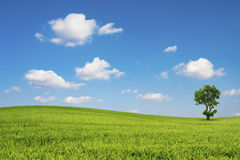 Green field and tree with blue sky cloud Stock Image