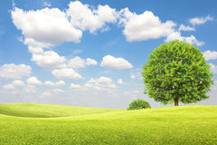 Green field and tree with blue sky and clouds Royalty Free Stock Photography