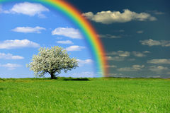 Green field with tree and rainbow Stock Photo
