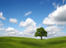 Green field and tree under blue sky. Green field and lonely tree under blue sky Royalty Free Stock Photography
