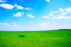 Green field and trees. Summer landscape green field and trees Stock Images