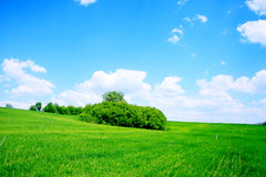 Green field and trees. Summer landscape green field and trees Royalty Free Stock Images