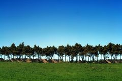 Green field with trees. Over blue sky stock photos