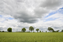 Green field with trees Stock Photos