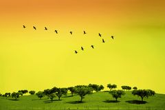 Green field with trees. And birds in classic V formation stock photos
