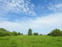 Green meadow , trees and cloudy sky, Lithuania Stock Photos