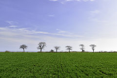 Green field with trees Stock Photography