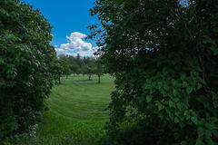 Green field, trees and blue sky with clouds. Photo with the image of particle of green field, trees and blue sky with clouds Royalty Free Stock Images