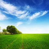 Green field with trees and blue sky Royalty Free Stock Photo