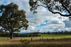Green field. And trees on a cloudy day Stock Photography
