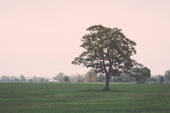 Green field with trees in the country Royalty Free Stock Image