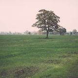 Green field with trees in the country Royalty Free Stock Photos