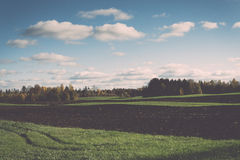 Green field with trees in the country. Vintage. Royalty Free Stock Photo