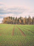 Green field with trees in the country. Vintage. Royalty Free Stock Images