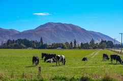 Green field and trees in front of Mount Hutt mountain range, Methven, New Zealand royalty free stock image