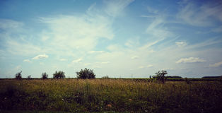 Green field and trees. Field of grass, trees and sky Royalty Free Stock Photos