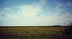 Green field and trees. Field of grass, trees and sky Stock Images